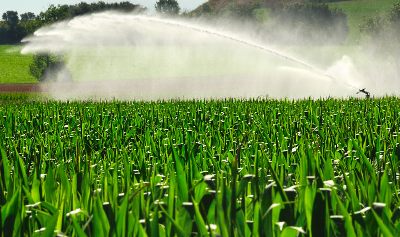 Spring Irrigation Opening Explained By The Experts At